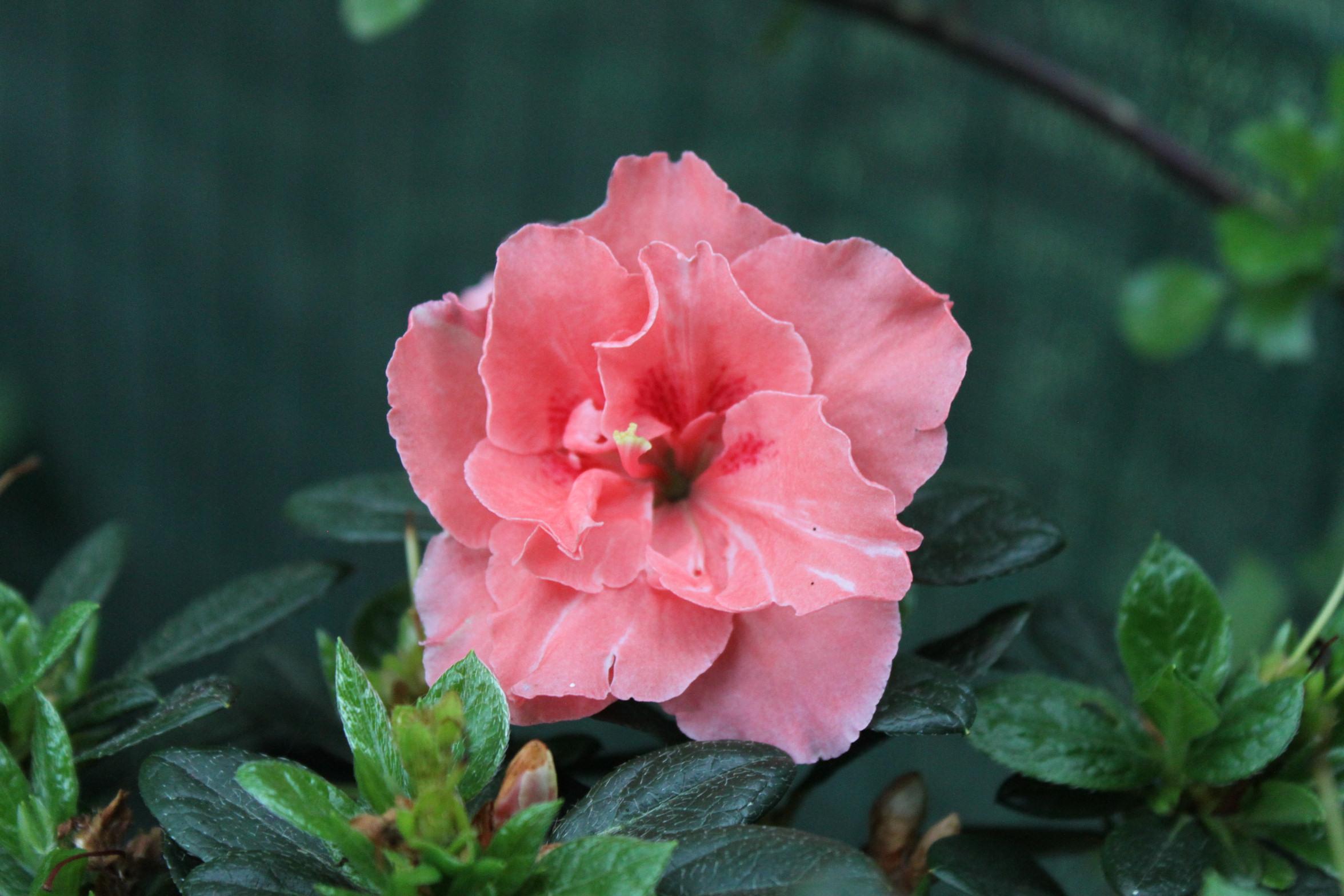 Großartig Blumen Mai Referenz Von San Luigi Genommen Nur Ein Paar Klicks