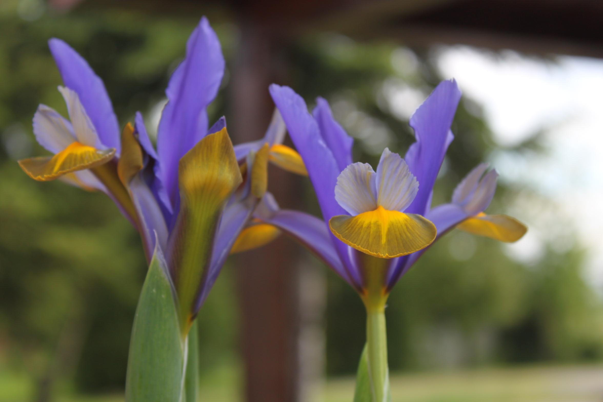 Bezaubernd Blumen Mai Sammlung Von San Luigi Genommen Nur Ein Paar Klicks